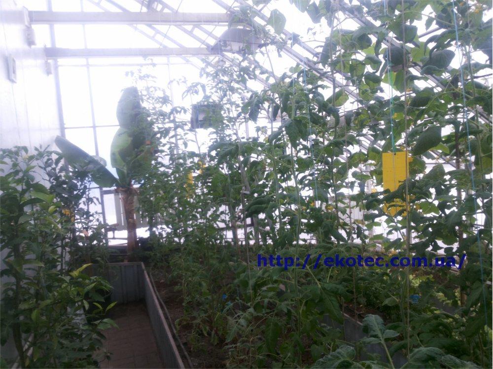 Наш Сад - телепередача для садоводов. Смотреть программу