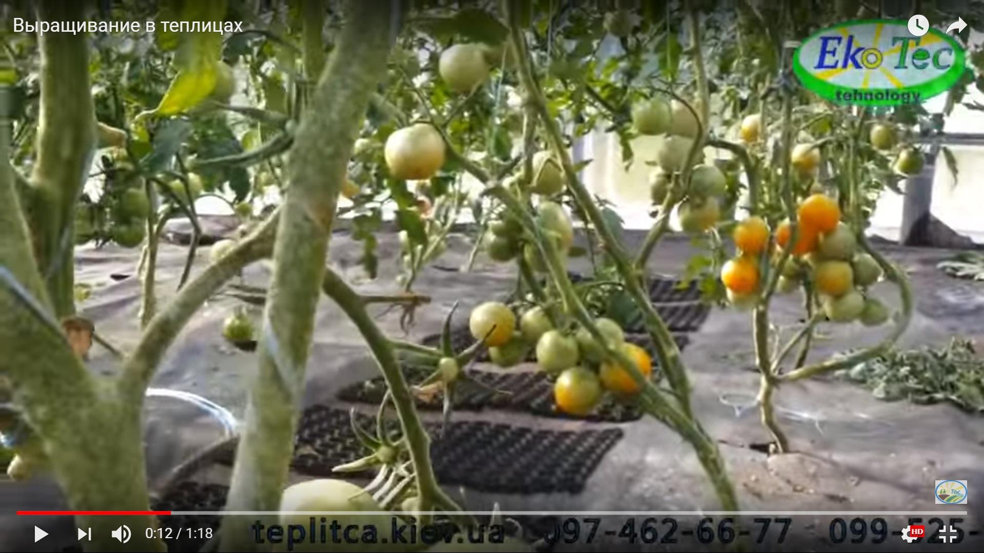Черешневый сад как бизнес с минимальными вложениями