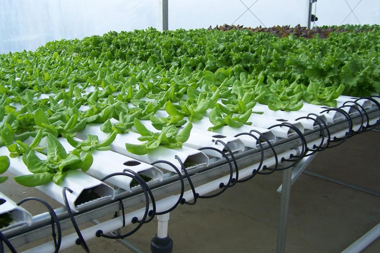 выращивание овощей дома гидропоника